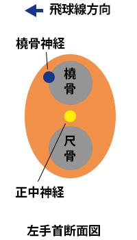 左手首のアームローテーションの断面の画像
