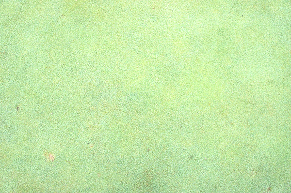 甘楽カントリーのグリーンの画像