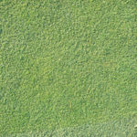 グリーンの芝目の読み方 芝目があったら3割増しで打とう