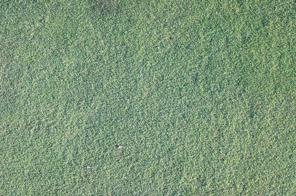 熱海倶楽部 東軽井沢ゴルフコースのグリーンの画像