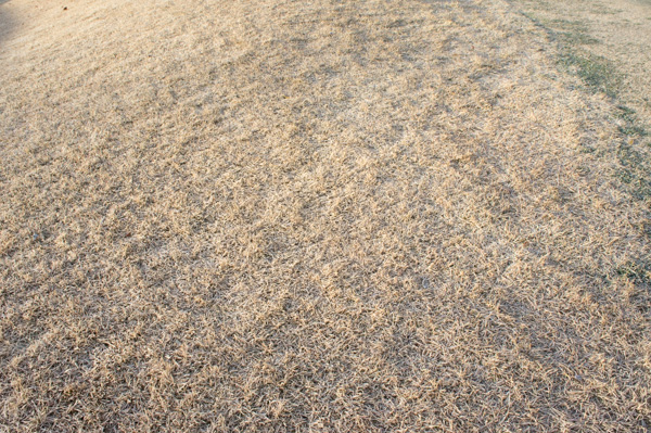 レイクウッドゴルフクラブ富岡コースのラフの画像