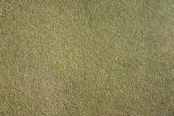 藤岡ゴルフクラブのグリーンの画像