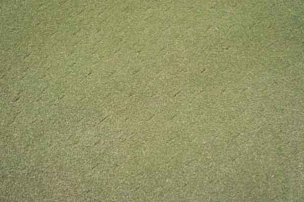 緑野カントリークラブのグリーンの画像